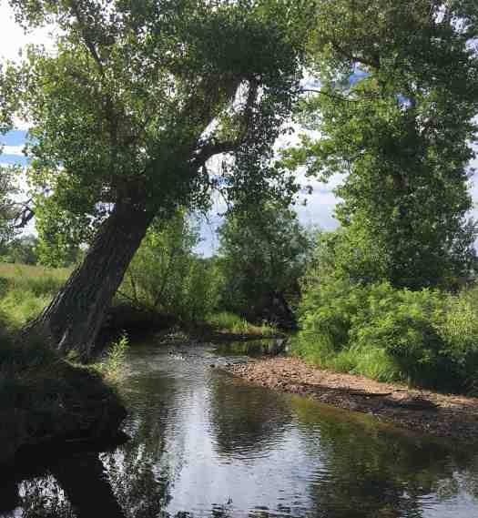 S Boulder Creek mid-julyc